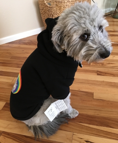 That's the dog in a unicorn hoodie, because fall.