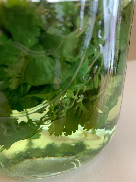 Making cilantro-infused vodka